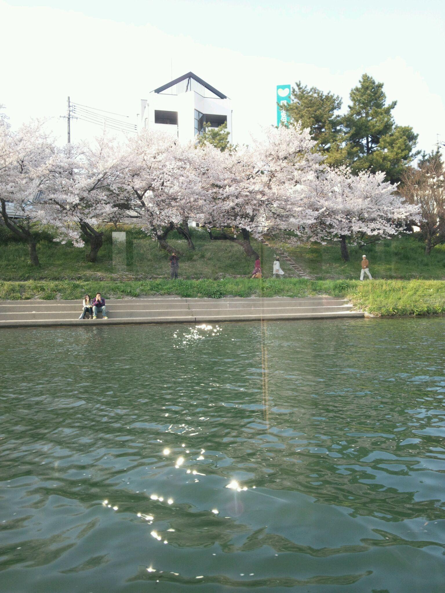 岡崎桜まつり乙川舟遊び